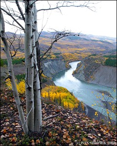 """GRAND CANYON OF STIKINE #4 "", B.C.,Canada."