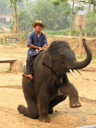 THAILAND - ELEPHANT CAMP