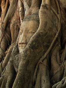Buddha inside a banyon tree