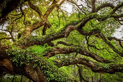 THE ANGEL TREE, JOHNS ISLAND SC