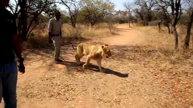 South Africa Video#4