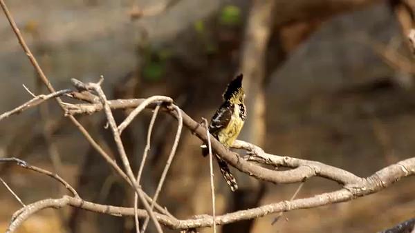 South Africa Video for SmugMug#16-Bird on Branch mp4