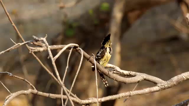 South Africa Video for SmugMug#16-Bird on Branch mp4