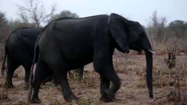 South Africa Video for SmugMug-#19-Elephant Parade mp4
