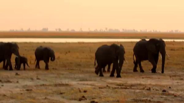 South Africa Video for SmugMug#20-Elephants mp4
