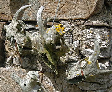 Sheep skulls on the wall at Nether Lodge