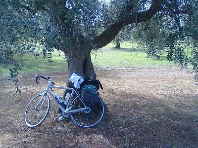 Bike resting in an olive grove in Puglia, Italy