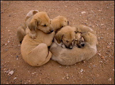 Pack of puppies • Temple of Athena • Turkey • 2006