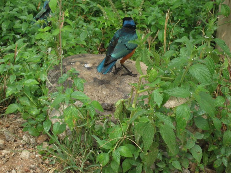 D9 bird 3