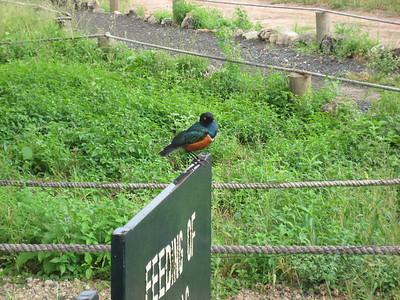 D9 bird 2