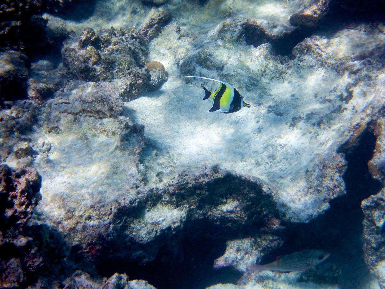 Rarotonga Reef
