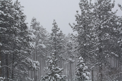 Tahoe 2009