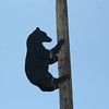Someone had fun with putting this metal bear up on a post.