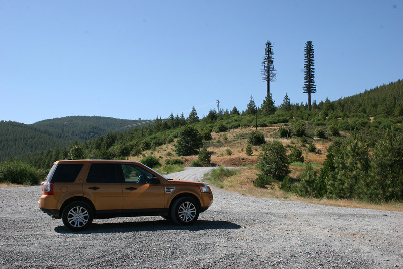 Orange Crush taking a quick break from the pony express trail near south lake tahoe.