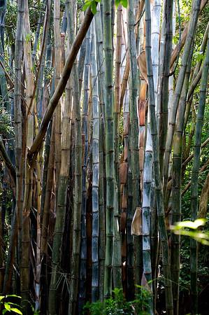 Bamboo, Lantau island, Hong Kong.