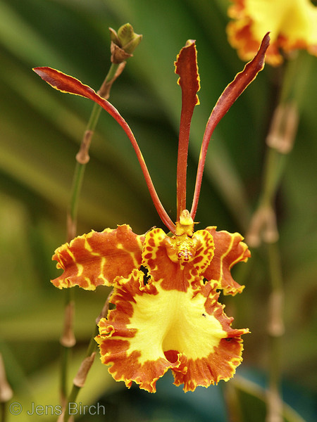 World Orchid Expo