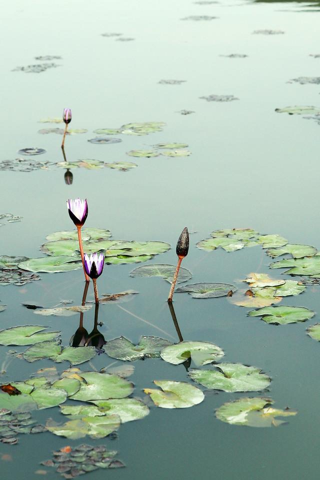 Flower Yilan 宜蘭