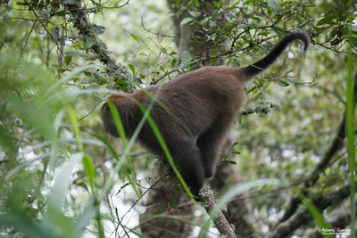 Monkey, Taiwan