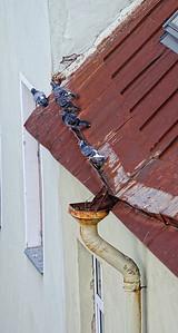 Lindeijer_2012-09-21_095224
