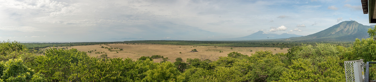The Savanna from the Observation Tower