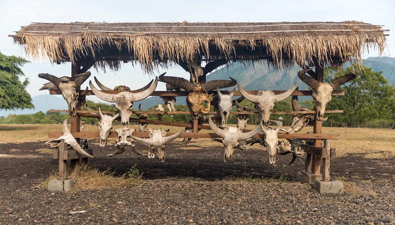 Bufallo's Skulls
