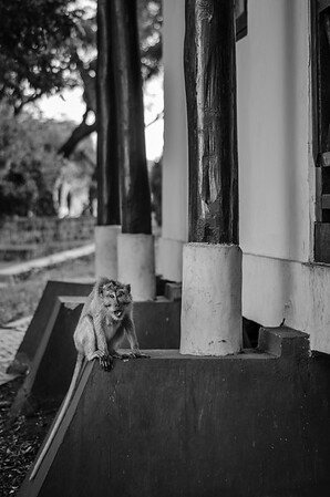 Monkey, the Menace