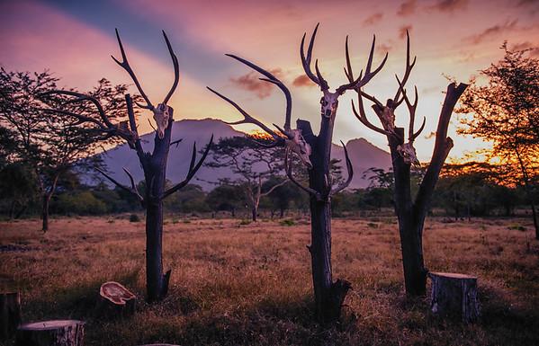 Deer Skulls
