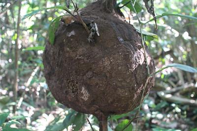 Termite nest.