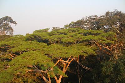Canopy from tower at Refugio Amazonas.