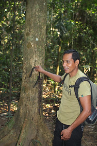 Luis pointing out the rubber tree.