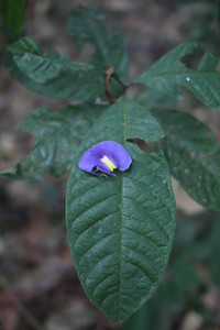 Flower petal on a leaf.