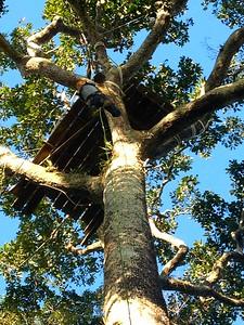 Tree climbing!!