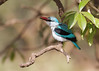 In Tanzania at Ngorongoro Conservation Area and Crater, Kingfisher