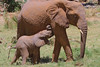 Samburu National Park, Larsen's Camp, Kenya, Herd of elephants and babies