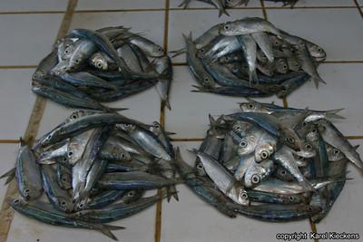 T 01_31 Dar Es Salaam Vismarkt