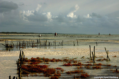 T 03_45 Oostkust Zanzibar  Zeewiercultuur