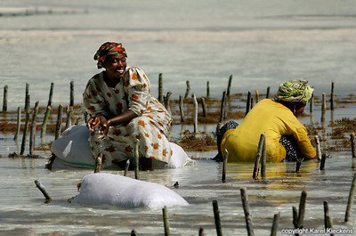 T 03_46  Vrouwen oogsten zeewier