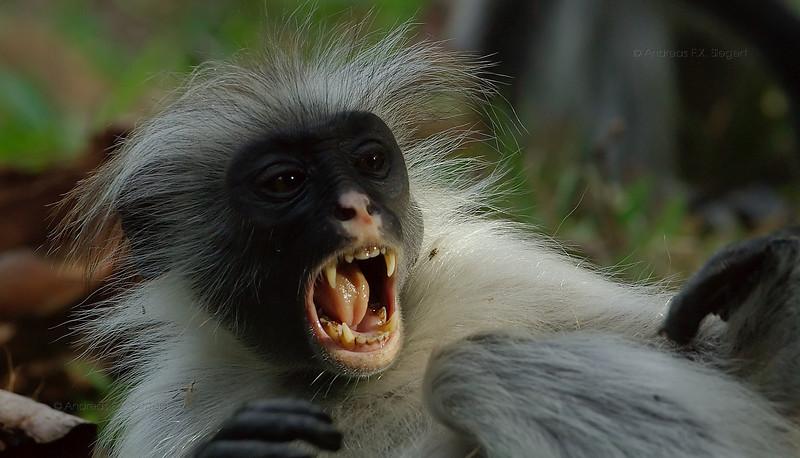 Ha! I am ferocious!