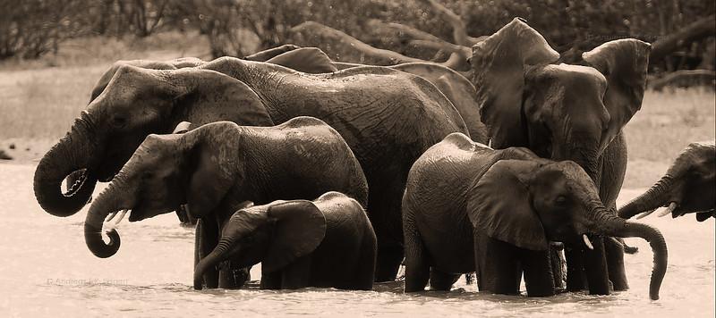 Elephants at the lake