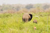 Elephants in greenery