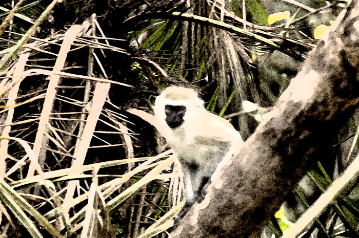 Fresco'ed vervet monkey