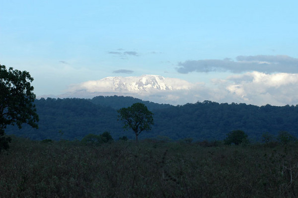 Woke up to see snow covered Mt Kilimanjaro - tallest peak in Africa. Ground level climate is like Texas -dry and hot.