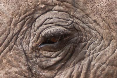Tanzania Safari - Day 1
