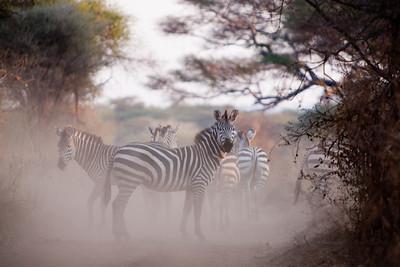 Tanzania Safari - Day 2