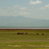 Lake Manyara is in the background. They never got closer than this.