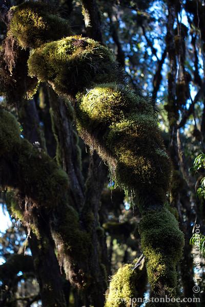 Moss Covered Rainforest