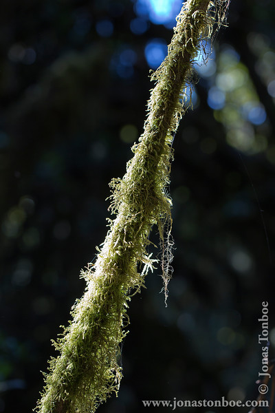Moss Covered Branch