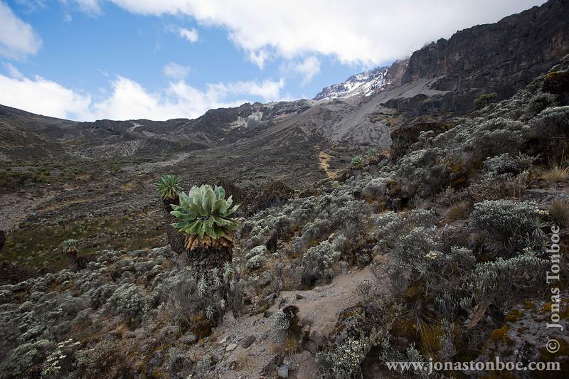 Trail up Barranco Wall