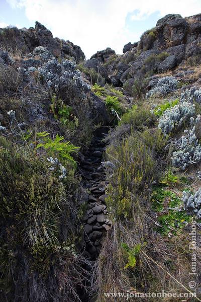 Stream at Lower Alpine Moorland