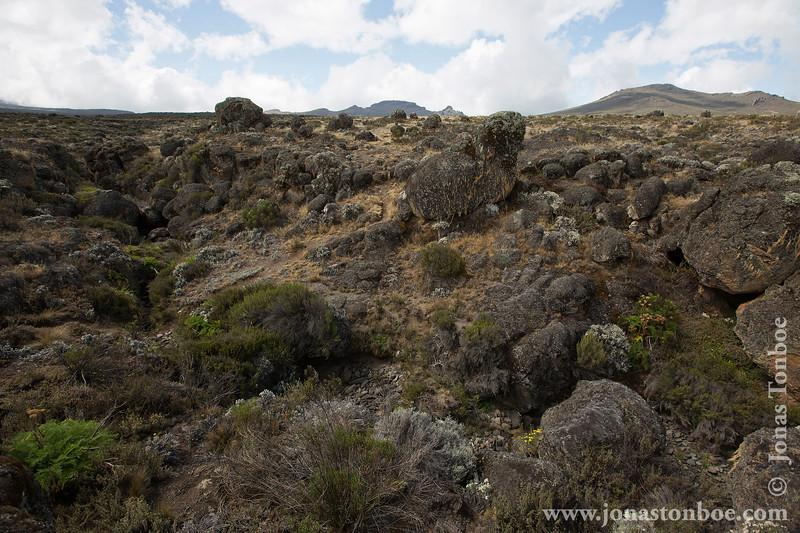 Lower Alpine Moorland